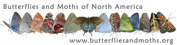 Butterflies and Moths of North America logo